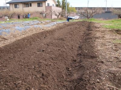 園児による畑の管理1403033