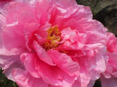 東光寺中庭の花1404182