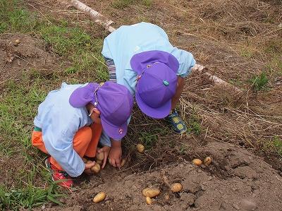 ジャガイモの収穫1406142