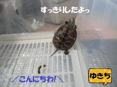 CIMG6849_convert_20140707162635.jpg