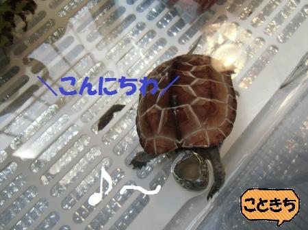 CIMG6850_convert_20140707162747.jpg