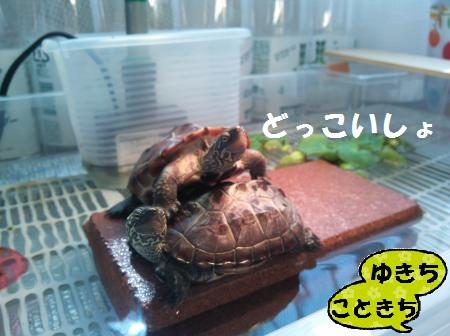 DSC_0606_convert_20141020132634.jpg