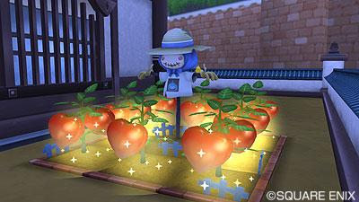 巨大トマト2.1後期