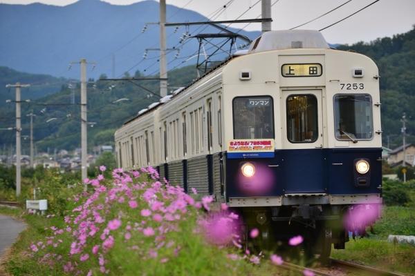 2014年9月19日 上田電鉄別所線 中野~舞田 7200系7253F