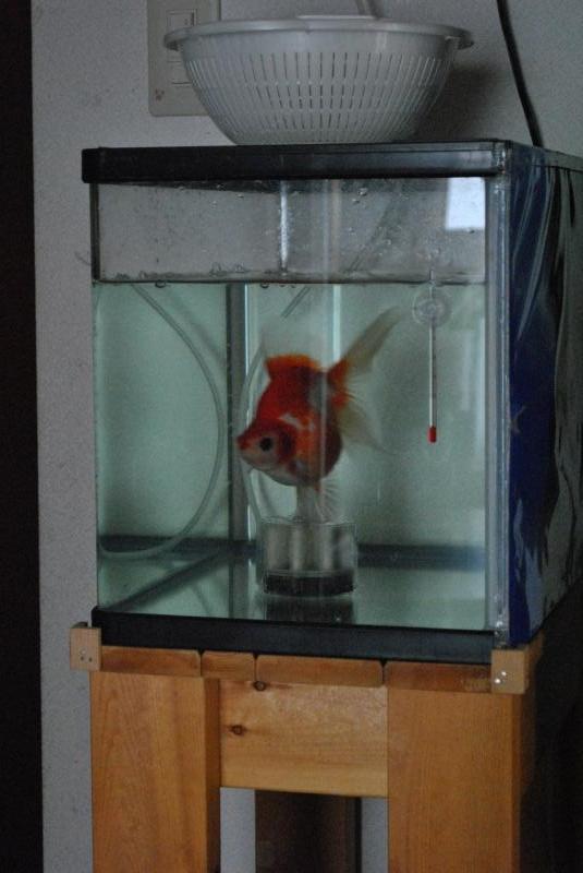 2014年4月埼玉養殖魚まつり