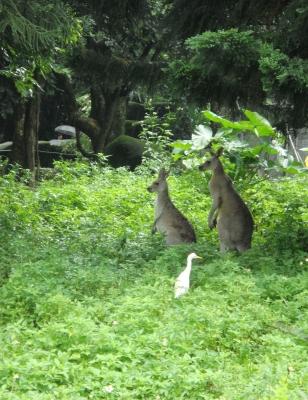 TW-zoo3.jpg