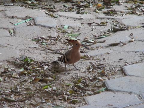 201410 cairo bird