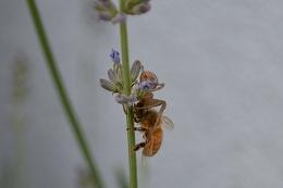 DSC_0141(25)(1)ハチとクモ