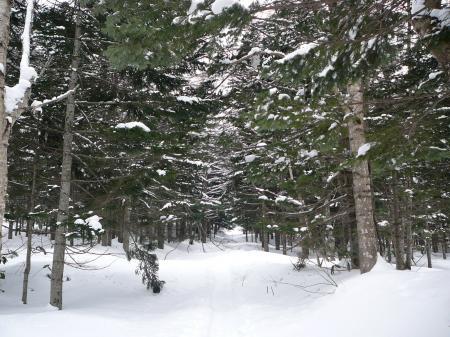 木立の中をのんびり~
