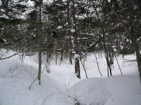 林道歩きが長過ぎ飽きてきた…