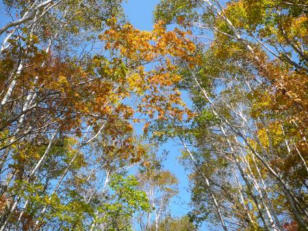 下山は紅葉を楽しみながら