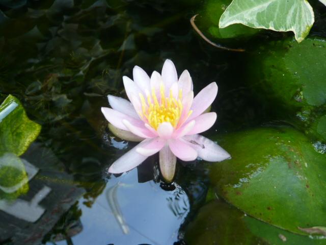 トロルの池