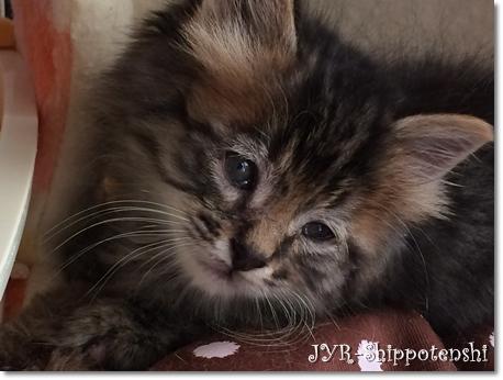 chibinyan140922_3.JPG