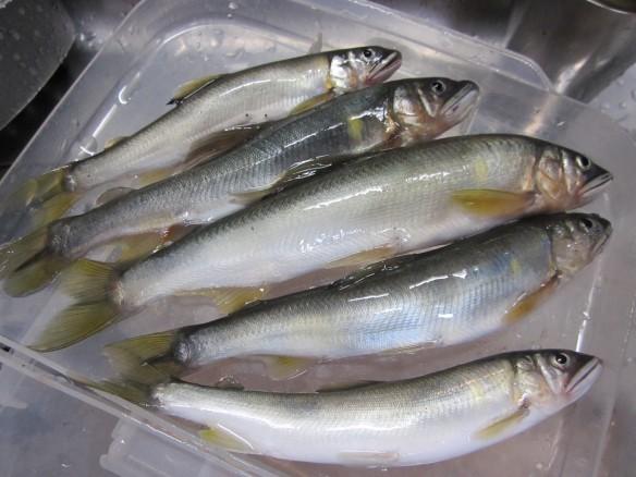 26.10.11鮎の餌釣り。足久保川 020_ks