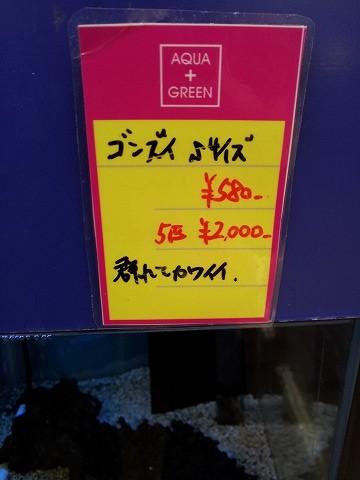 ゴンズイ_115522