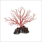 珊瑚 130万円