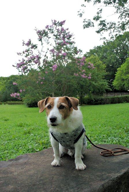2014長岡公園878