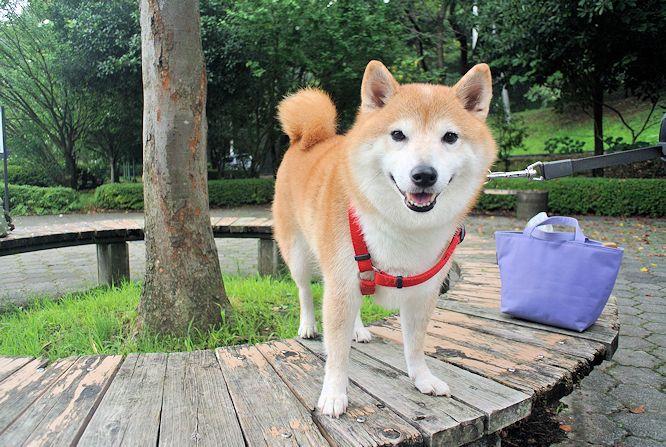 2014長岡公園900