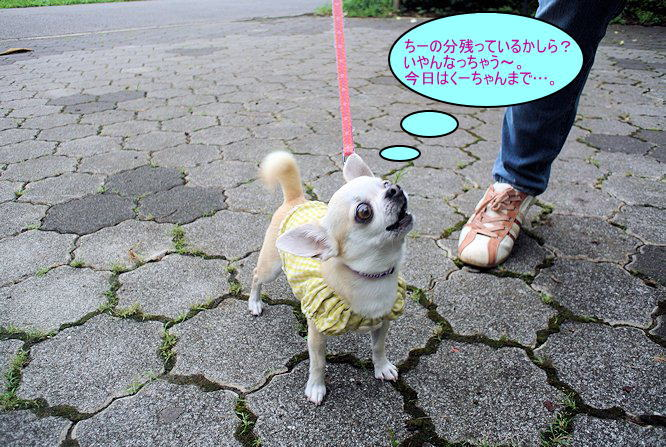 2014長岡公園903