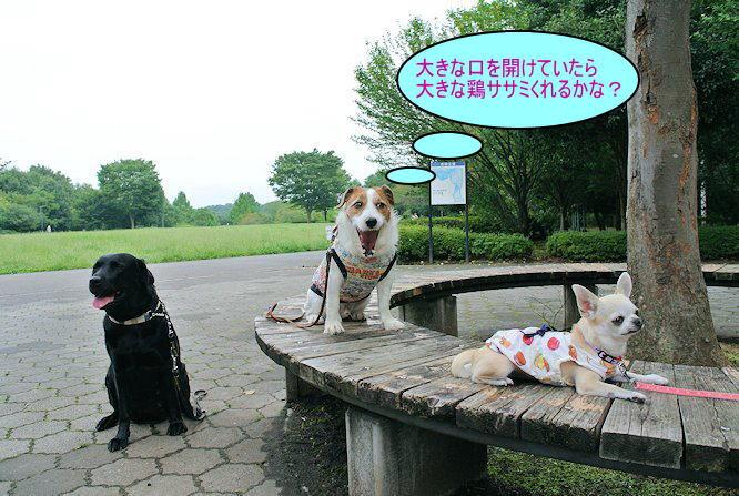 2014長岡公園961