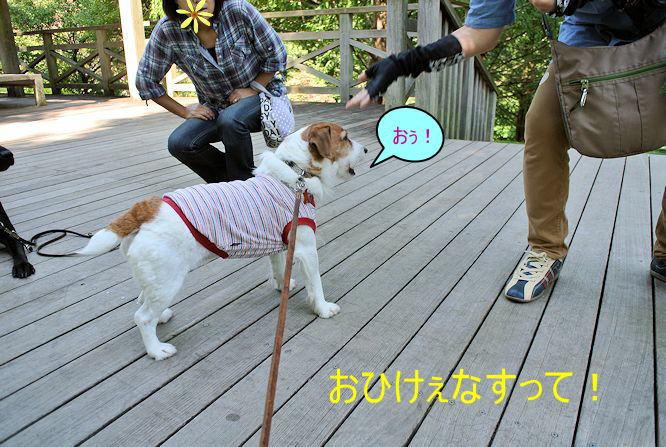 2014長岡公園965