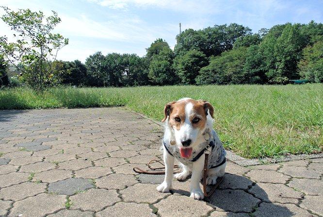 2014長岡公園983