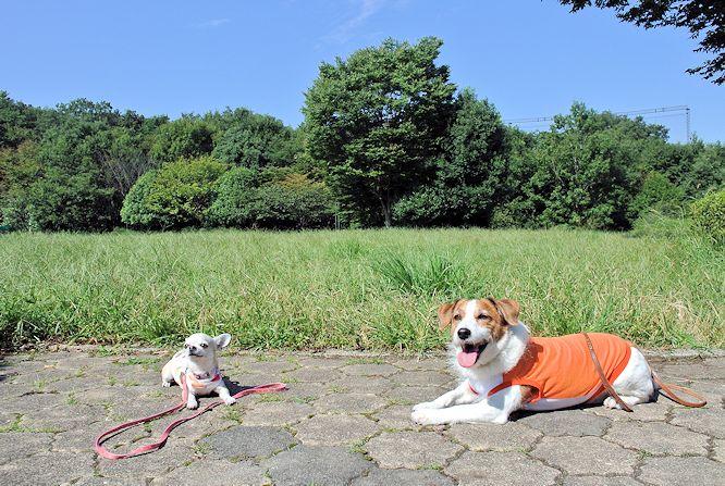 2014長岡公園990