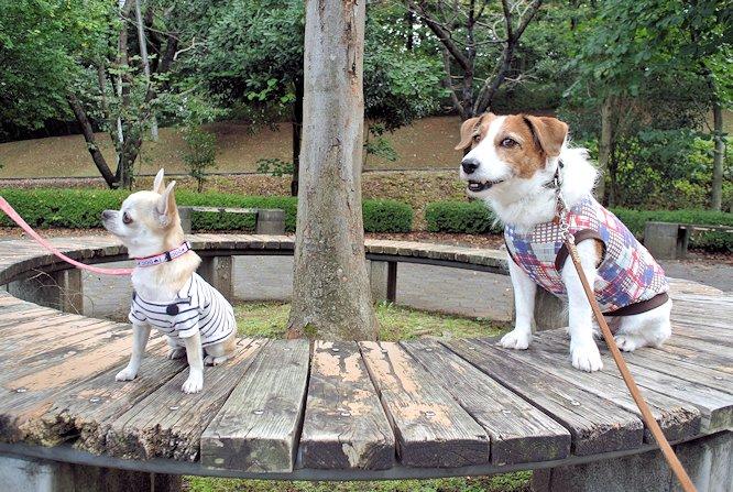 2014長岡公園1005