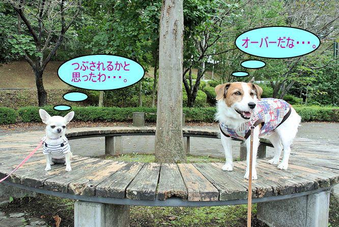 2014長岡公園1006