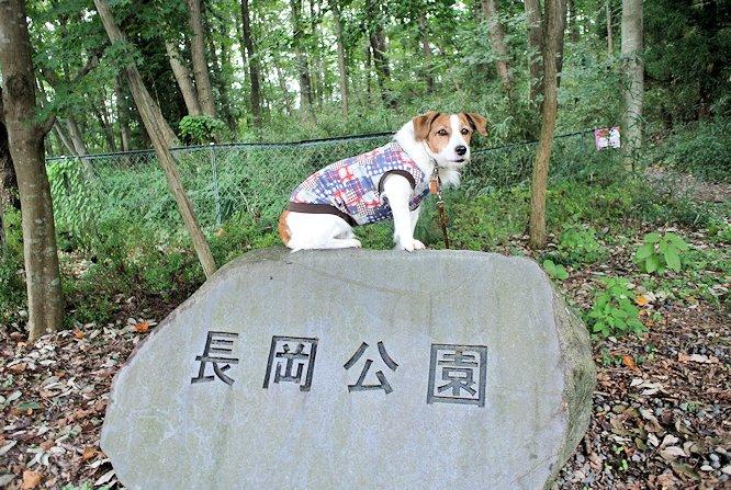 2014長岡公園1009