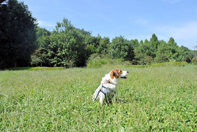 2014長岡公園1041