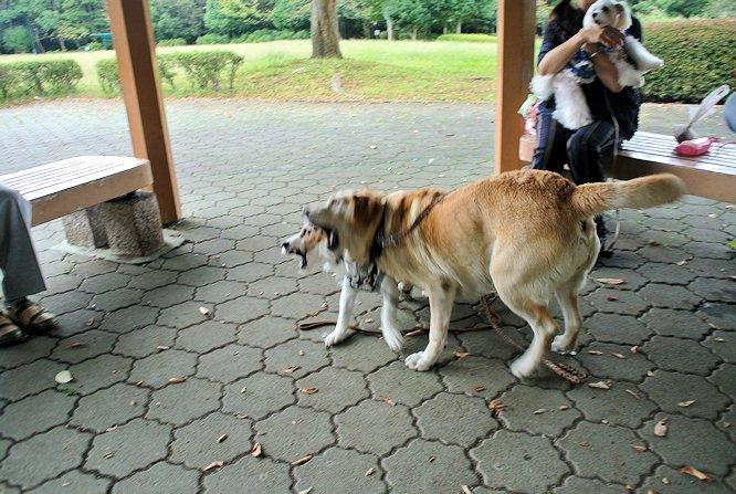 2014長岡公園1103