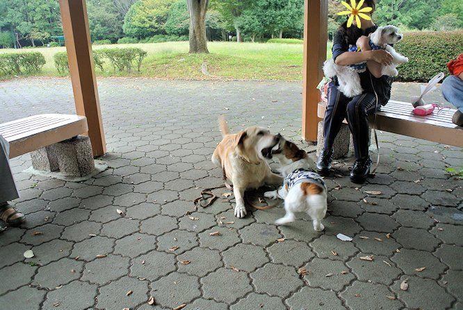2014長岡公園1104
