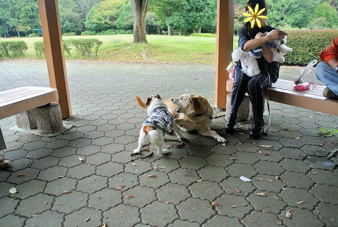 2014長岡公園1105