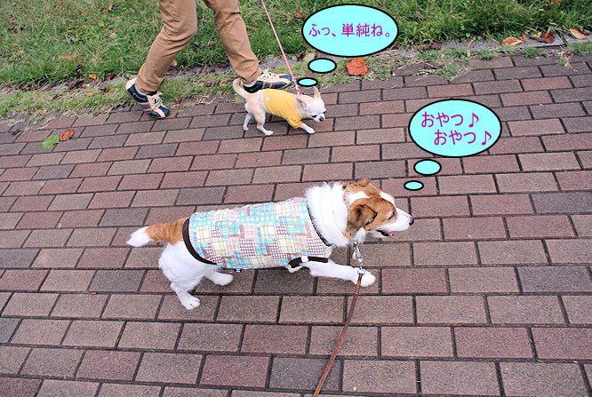 2014長岡公園1112