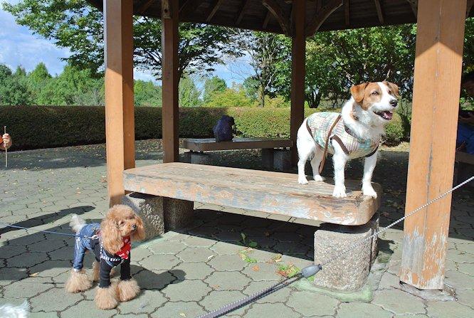 2014長岡公園1115