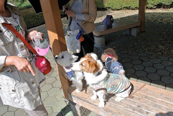 2014長岡公園1117