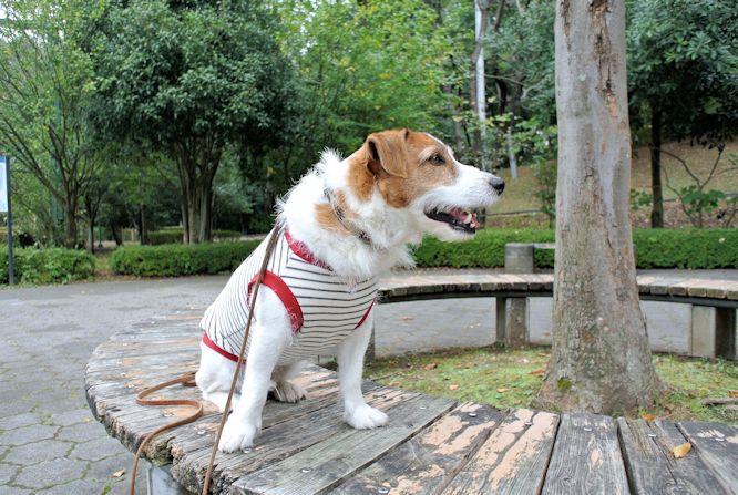 2014長岡公園1141