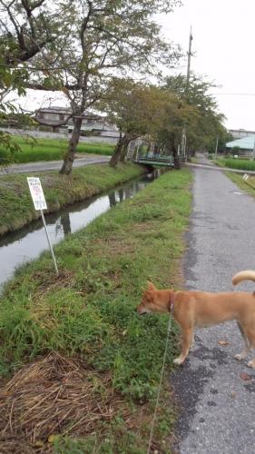 2014-8散歩道1