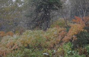 2014年黒岳雪の紅葉