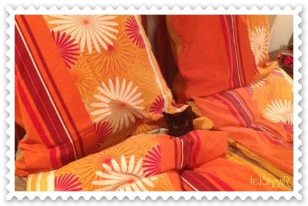 catsday2014a.jpg