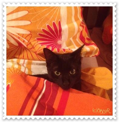 catsday2014b.jpg