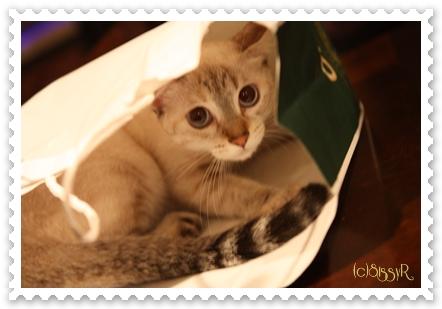catsday2014g.jpg