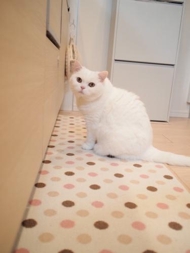 P5078424urabanashi.jpg