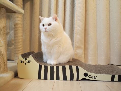 P5178574urabanashi.jpg