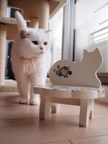 P6079209urabanashi.jpg