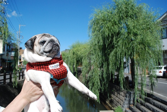 小野川に来ました