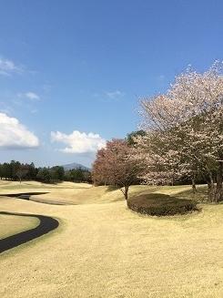140414サミット桜②