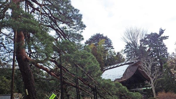 海岸寺 松と山門