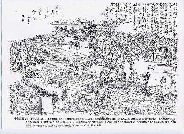 小金井川堤 江戸名所図会